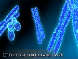 Estudio de la causa molecular del Cáncer