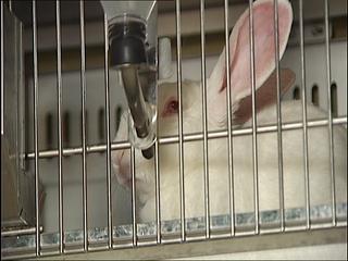 Conejo en un laboratorio