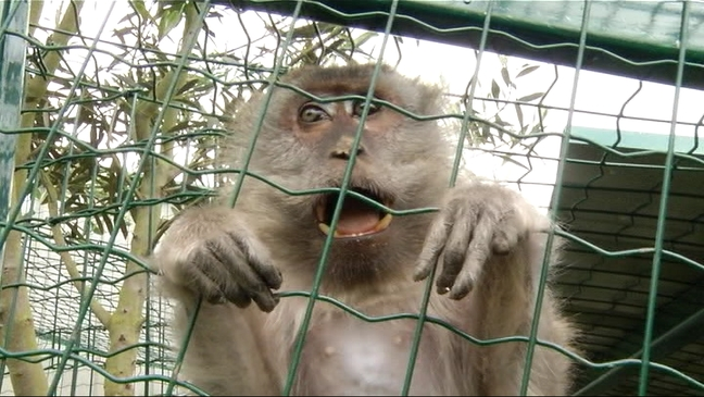 Mono en el núcleo zoológico de El Bosque