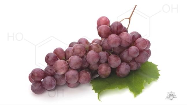 Racimo de uva investigado por la Universidad de Oviedo