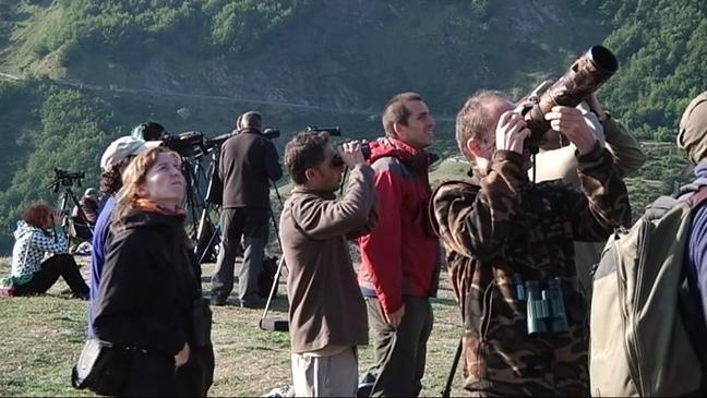 Turistas avistando osos