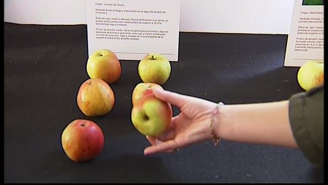 Manzana amarga presentada por el Serida