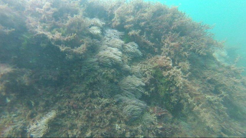 El calor afecta negativamente al fondo marino