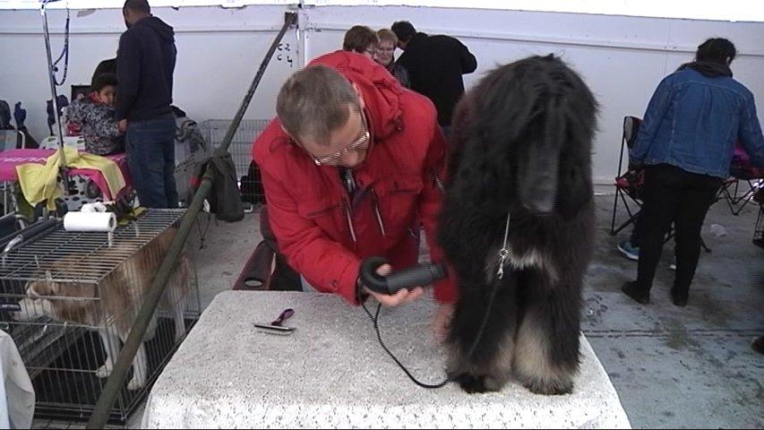 Feria del Perro en Tineo