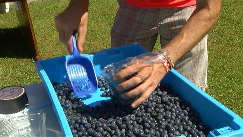Festival del Arandano y Frutos rojos en Villaviciosa