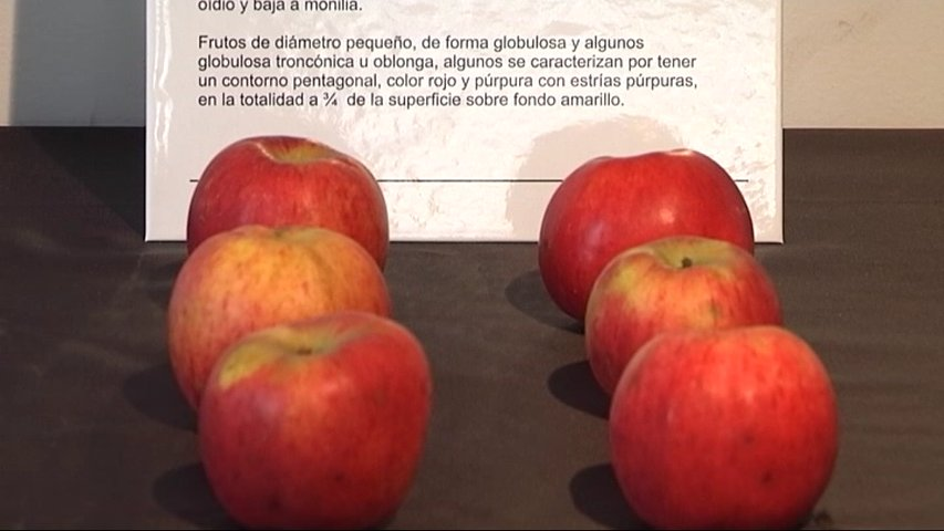 El Serida presenta nuevas variedades de manzana