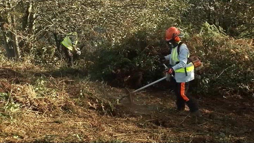 Un trabajador del plan de empleo de Oviedo desbrozando el monte