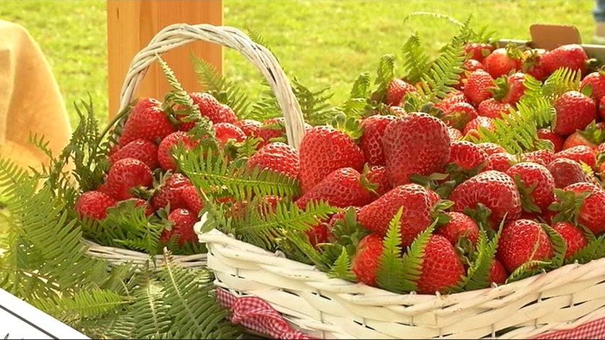 La lluvia y la falta de sol marcan la cosecha de la fresa