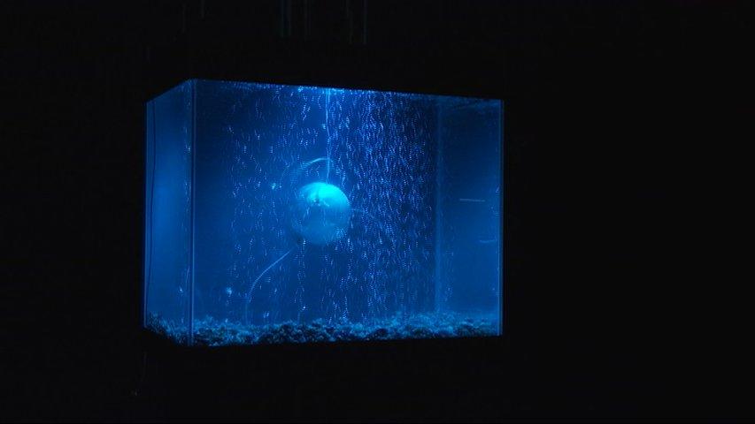 ArchaeaBot, un proyecto de Anna Dumitriu y Alex May