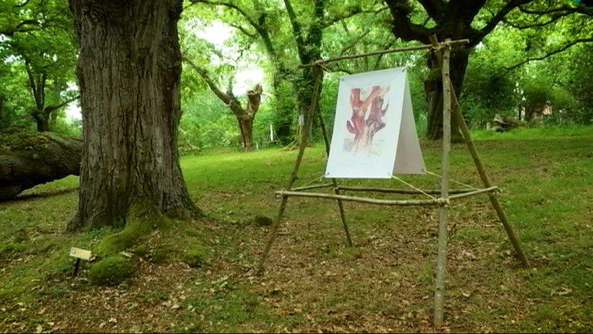 Exposición exterior de los árboles de Fueyo