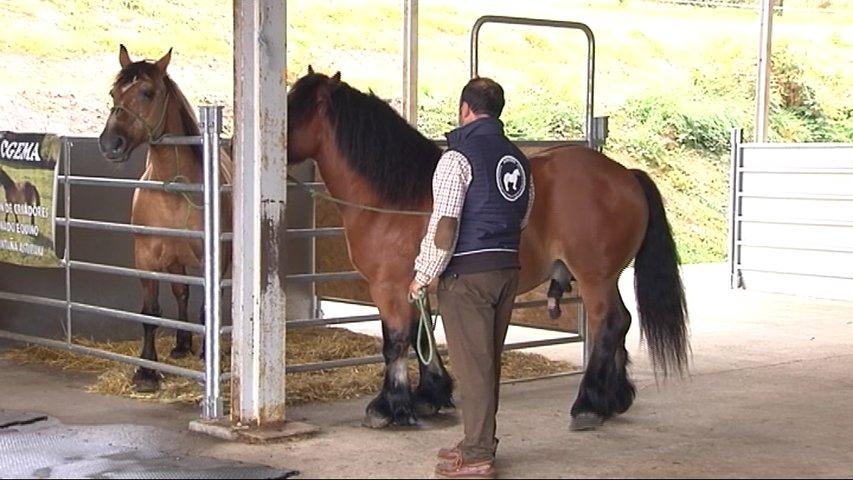 El Serida presenta un sistema mejorado de reproducción del ganado equino de aptitud cárnica
