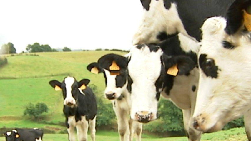 El Serida investiga para descubrir la calidad de vida del ganado a través de su leche