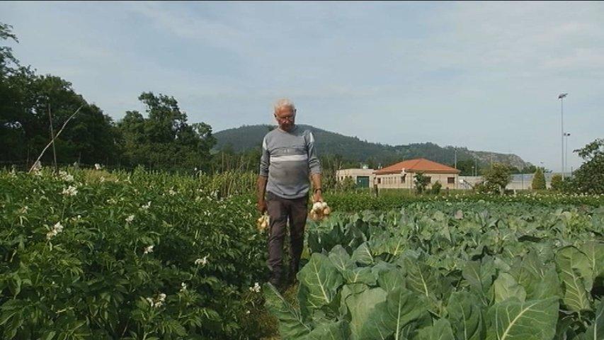 Celestino Menéndez vende sus cosechas en el mercado de los domingos de Grado